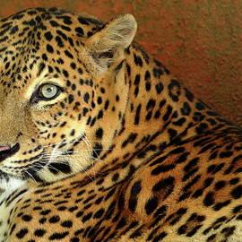 Ganesh Krishnan - Beautiful Eyes