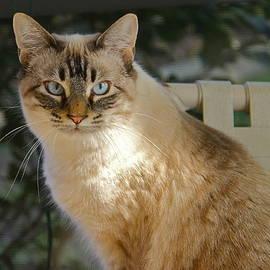 Beautiful Feline by Denise Mazzocco