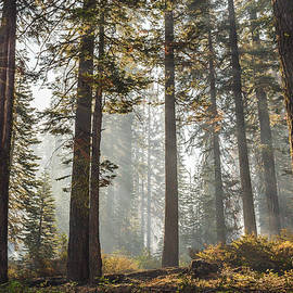 Beautiful forest by Davorin Mance