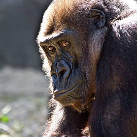 Miroslava Jurcik - Beautiful Gorilla