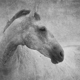 Michelle Wrighton - Beautiful Grey Horse in textured black and white