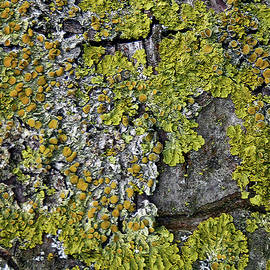 Lichen Abstract by Claudia O'Brien