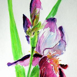 Beautiful lily - Kovacs Anna Brigitta