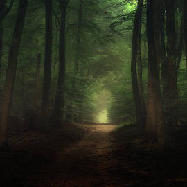 Tim Abeln - Beautiful morning in Speulderbos forest