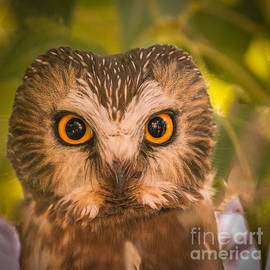 Robert Bales - Beautiful Owl Eyes