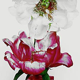 Beautiful Peony Flower # 2.