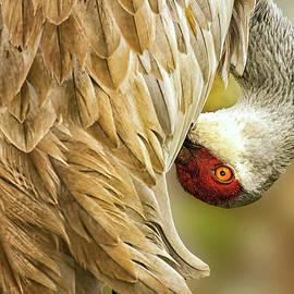 Davids Digits - Beautiful Sandhill Crane