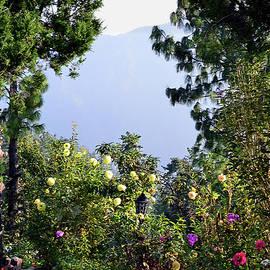 Harsh Malik - Beautiful Sceneries of Himalayas - Harsh Malik