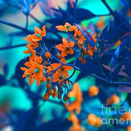 Beautiful Solanum Septemiobum Flowers  by Lance Sheridan-Peel