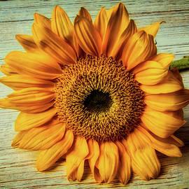 Beautiful Textured Sunflower - Garry Gay