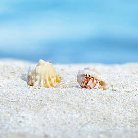Katesalin Pagkaihang - Beautiful two hermit crabs on white sand beach