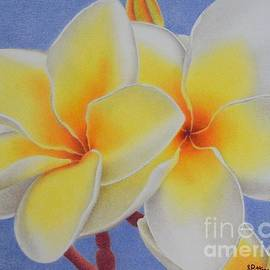 Sharon Patterson - Beautiful White Plumeria