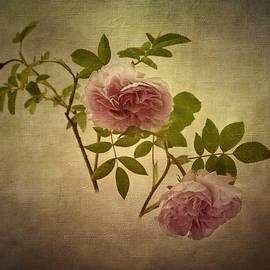 Robert Murray - Beauty in Pink