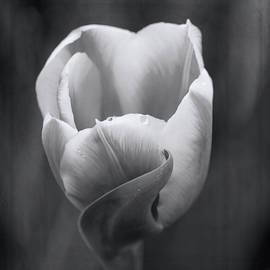 Jordan Blackstone - Beauty In Simplicity - Black and White Art