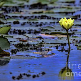 Beauty in the Marsh by Gary Holmes