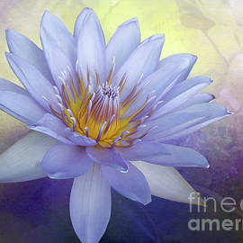 Kaye Menner - Beauty of a Waterlily by Kaye Menner