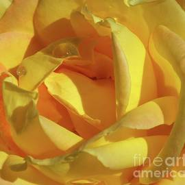Cindy Treger - Beauty Of A Yellow Rose