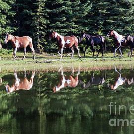 Bob Christopher - Beauty Of Horses 2