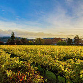 Beauty over the Vineyard Panoramic - Jon Neidert