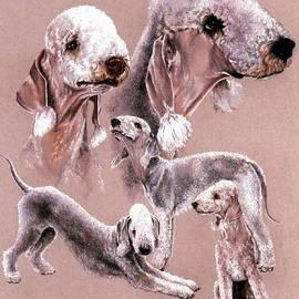 Barbara Keith - Bedlington Terrier