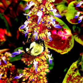 Bee Abstract by Ed Weidman
