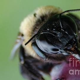 Bee by Andrea Anderegg