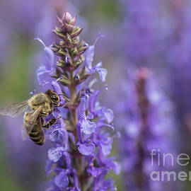 Bee in a Purple World by Eva Lechner
