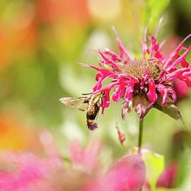 Bee or Moth by Nikki Watson    McInnes