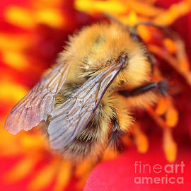 Colin Hunt - 10041 Bee Wings