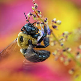 Bee With Wings In Motion by Brad Boland