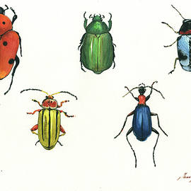 Juan Bosco - beetles