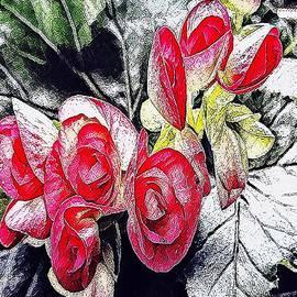 MaryLee Parker - Begonia  Blooming