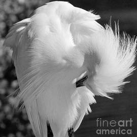 The Feathers of a White by Andrea Spritzer