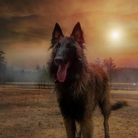 Rose-Marie Karlsen -  Belgian Shepherd