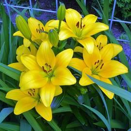 Bellingham Blooms by Rosanne Licciardi