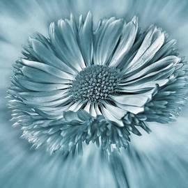Bellis In Cyan  #flower #flowers