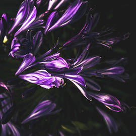 Bells and flowers - Jorgo Photography - Wall Art Gallery