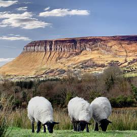 John Carver - Benbulben, Co. Sligo - sheep grazing at the base of the mountain on a sunny spring day