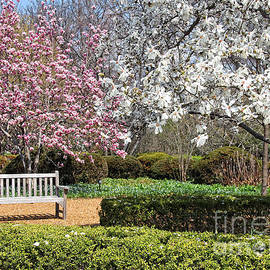 Bench Under Spring Blossoms by Anna Sheradon