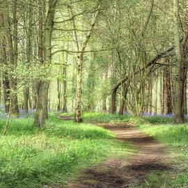 Bentley Woods, Warwickshire #landscape