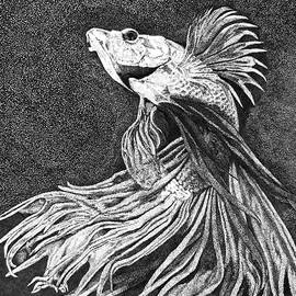 Betta fish by Fernando Poluakan