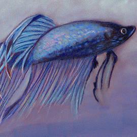 Jay Johnston - Betta Fish