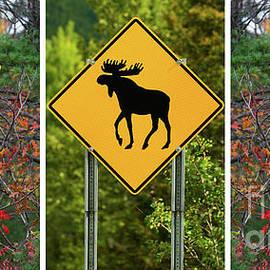 Les Palenik - Beware Of The Moose Triptych