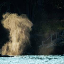 Beyond The Mist - Wildlife Art by Jordan Blackstone