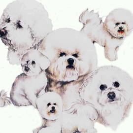 Bichon Friese Montage by Barbara Keith
