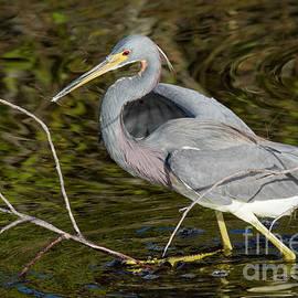 David Cutts - Big Bird Little Stick