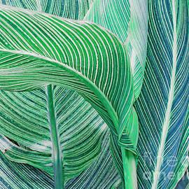 Hal Halli - Big Green Leaves