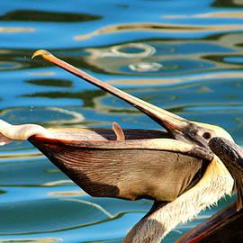 Cynthia Guinn - Big Mouth Pelican