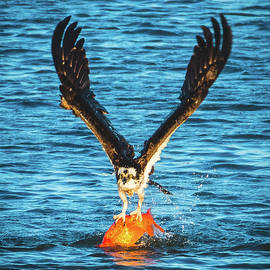 Jeff at JSJ Photography - Big Orange Koi Fish Wins