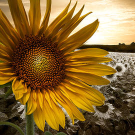 Big Sun by Debra and Dave Vanderlaan